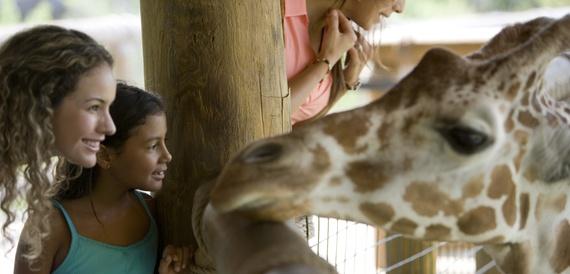 2015-11-28-1448712530-463004-giraffe.jpg