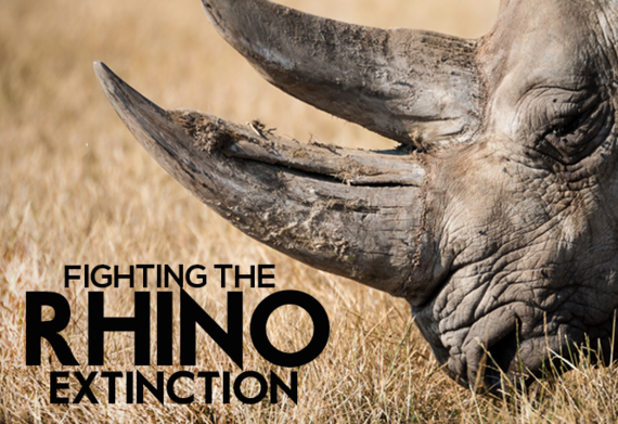 2015-11-30-1448882005-3492458-rhinoextinction.png