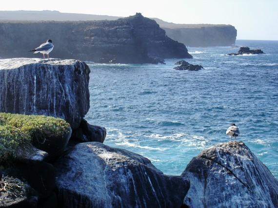 2015-11-30-1448915638-2795355-Galapagosbirdsandseacliffs.jpg