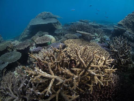2015-12-01-1448971103-3257683-Corals.jpg
