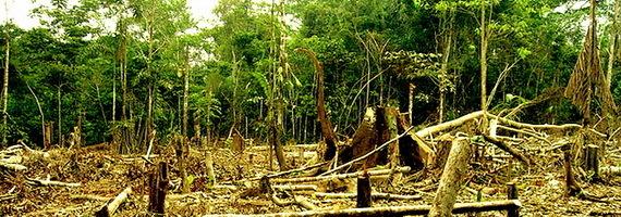 2015-12-01-1448995659-9307432-amazonloggingclearcuttingdeforestationTDCccr205.jpg