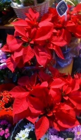 2015-12-02-1449042924-2840009-floresdePascuaenbaja.jpg