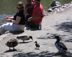 Feeding ducks. WildCare photo by Susan Miller