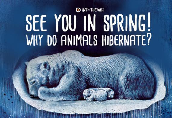 2015-12-03-1449141684-9480102-hibernate.png