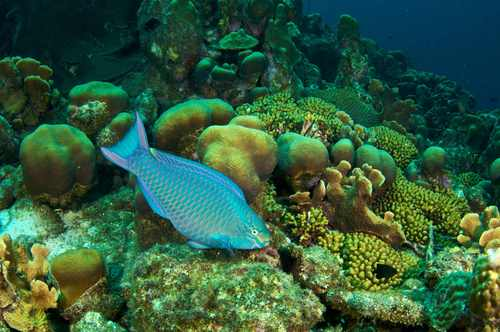 2015-12-03-1449185651-2456127-queenparrotfish2smallbysshe.jpg