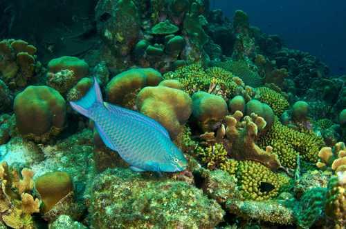 2015-12-03-1449185651-2456127-queenparrotfish2smallbysshe.jpg
