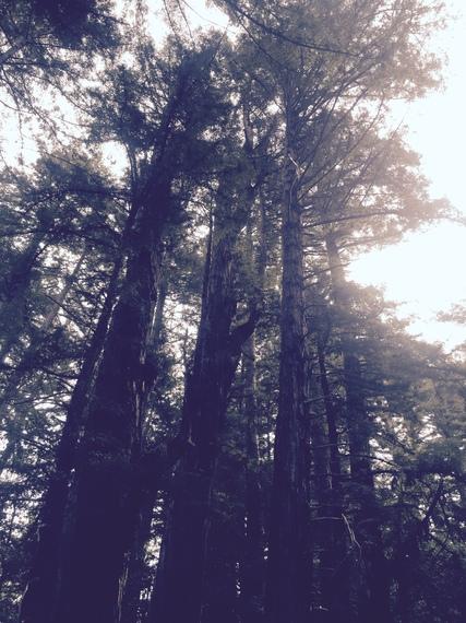 2015-12-07-1449513840-735359-redwoods1.jpg