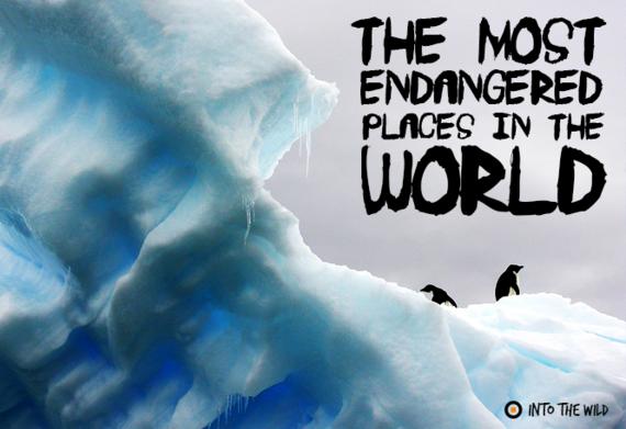 2015-12-08-1449594848-1013601-endangered.png