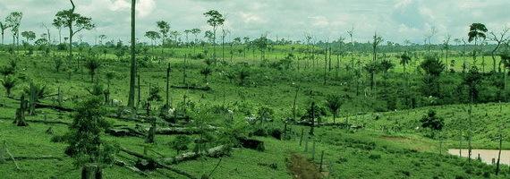 2015-12-08-1449603538-4161148-deforestationamazonbrazilTDCccr306.jpg