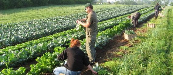 2015-12-08-1449603819-9364356-sustainableagriculturefarmingSourcesustainableaged.orgccr306.jpg