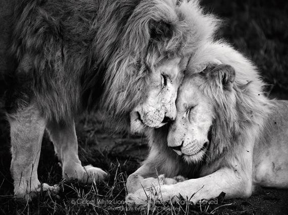 2015-12-09-1449662816-4107906-lionbrothers.jpg