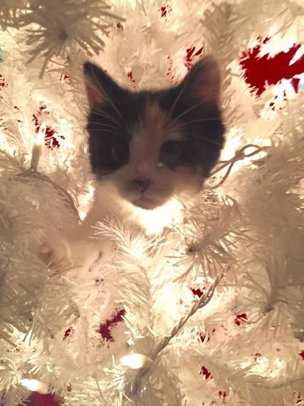 2015-12-09-1449676168-510383-catintree.jpg