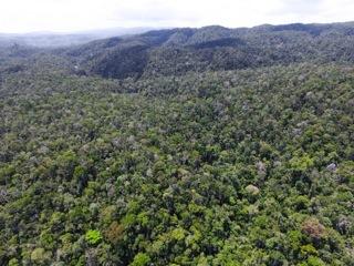 2015-12-09-1449683975-3098576-Rainforestsmall.jpg