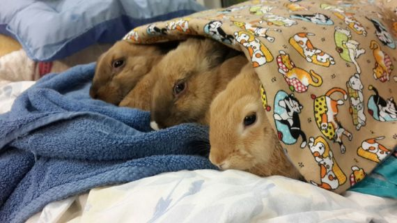 2015-12-10-1449773521-478889-bunnies.jpeg