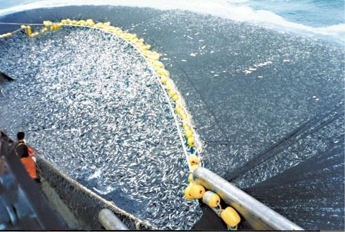 2015-12-11-1449814058-5094604-overfishing.jpg