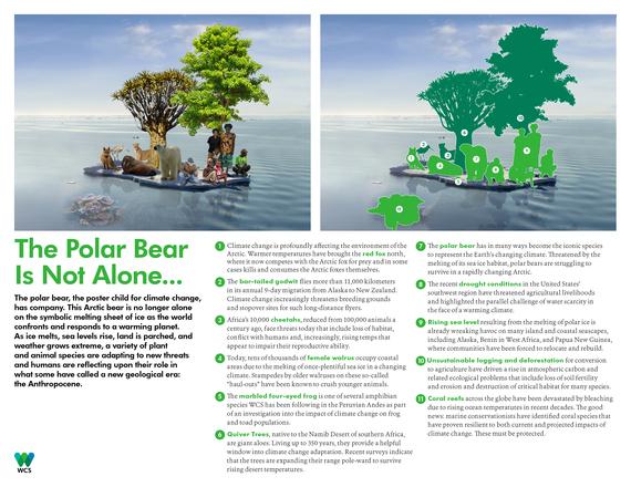 2015-12-14-1450113966-2836545-The_Polar_Bear_Is_Not_Alone31.jpg