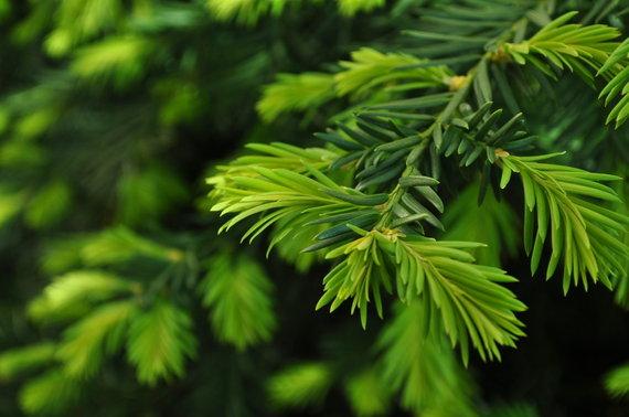 2015-12-16-1450291615-1091268-tree.jpg