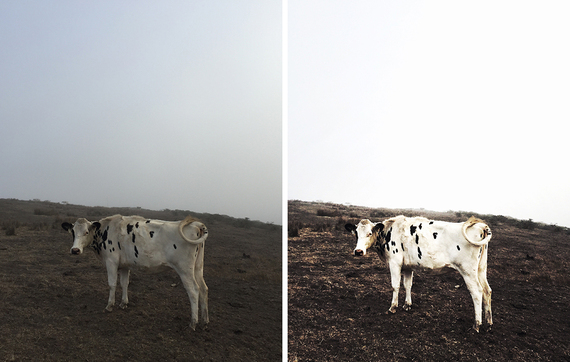 2015-12-17-1450310445-2058592-Spot_Cow_Point_Reyes_Instagram_Before_After.jpg