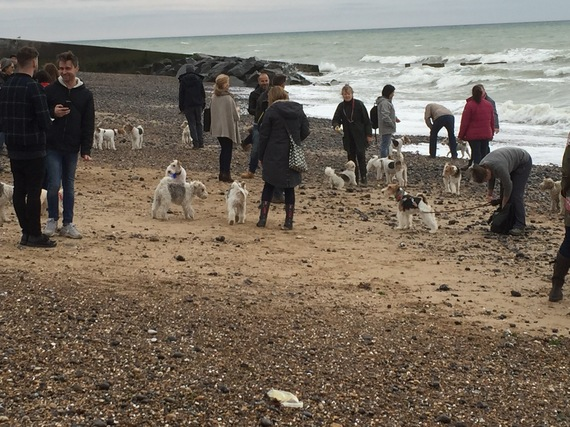 view download images  Images A Dog's Day out - The Fox Terrier Walk in Brighton | HuffPost UK