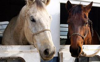 2015-12-18-1450477647-7201308-horsebill.jpg