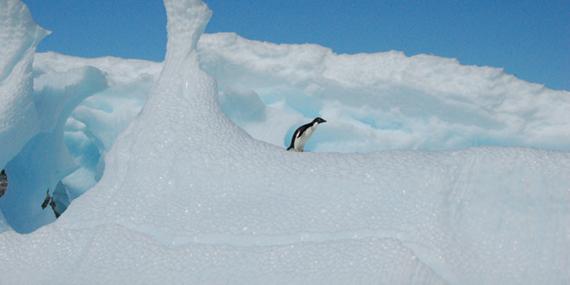 2015-12-21-1450718902-4203113-ANT_PenguinOnIceberg_KeithTurner_Freewithcredit.jpg