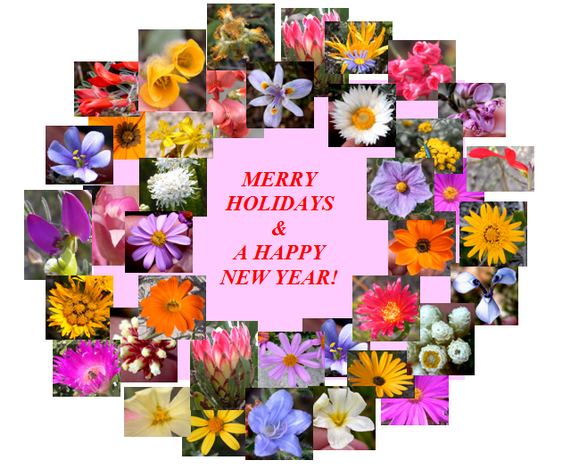 2015-12-22-1450819251-2118127-africanwildflowerpinkholidaywreath2014.png