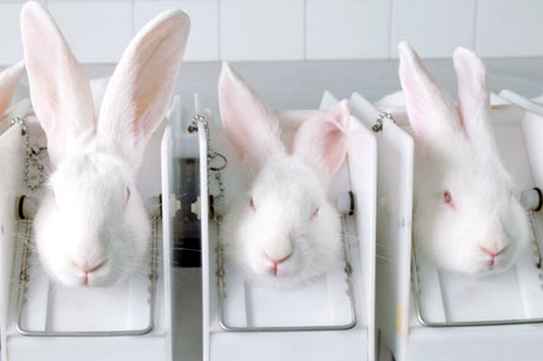 persuasive essays on animal testing Argumentative essay on animal testing the practice of using animals for testing has been a controversial issue over the past thirty years animal testing is a morally debated practice.