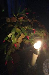 2015-12-23-1450830075-7590847-CandleChristmasCactus.jpg