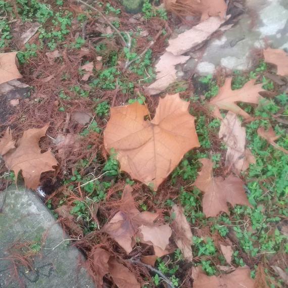 2015-12-28-1451278363-8363601-Leaf.heart.jpg