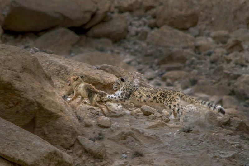 2015-12-28-1451297923-8335579-leopard21.jpg