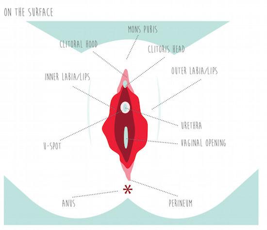 women sexual pleasure zones