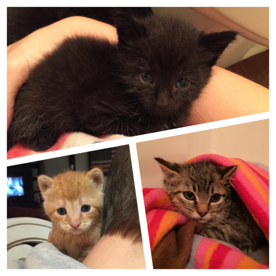 2015-12-30-1451489328-1264782-Kittens.png