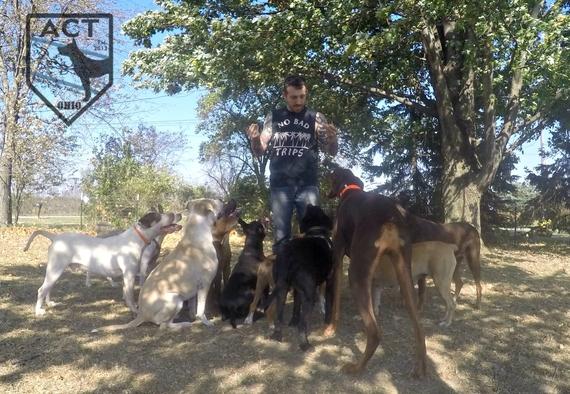 2015-12-31-1451594705-2181408-twelvedogssitting.jpg