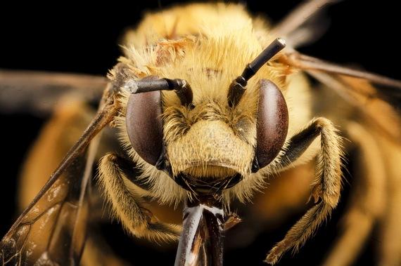 2016-01-01-1451637780-3766372-Bee.jpg