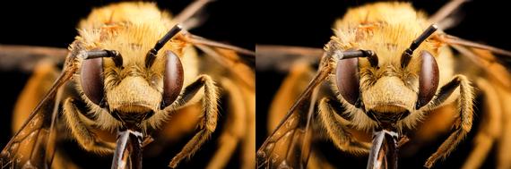 2016-01-01-1451637910-4293392-Bee.jpg
