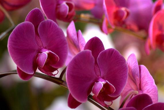 2016-01-03-1451837398-107221-orchid.jpg