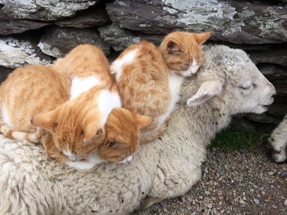2016-01-07-1452136147-8884161-Kittens.jpg