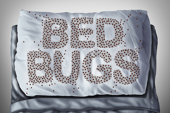 2016 01 07 1452177025 5269853 Bedbugs Jpg