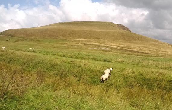 2016-01-15-1452856326-4017530-sheepwreckedlandscape.jpg