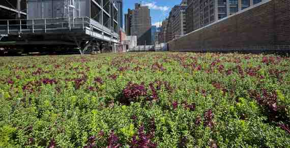 Green Roofs Stormwater And El Ni 241 O Huffpost