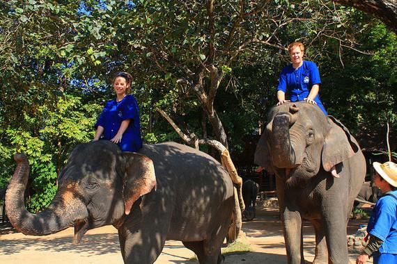 2016-01-21-1453374707-4664076-Elephants.jpg