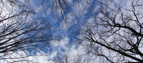 2016-01-21-1453397878-4434566-trees.png