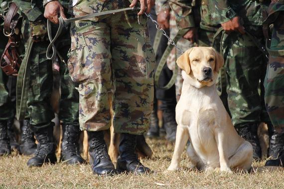 2016-01-25-1453758458-498640-militarydog.jpg