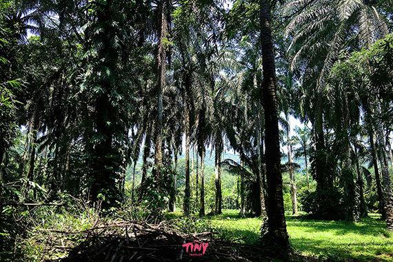 2016-01-26-1453774705-8285885-BotanicalGardenstelahonduras.jpg