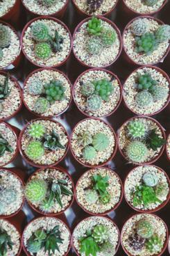 2016-01-29-1454027791-6666866-25succulents.w245.h368.jpg