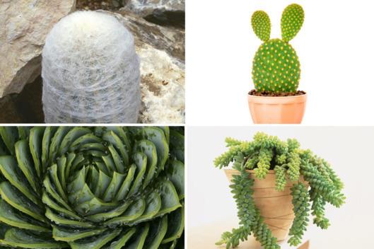 2016-01-29-1454027911-7948651-25succulents2.w529.h352.jpg