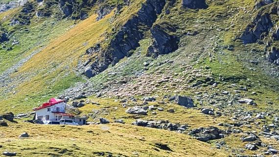 2016-02-01-1454346450-2208925-sheeps_down_mountain.jpg