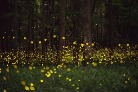 2016-02-01-1454365448-3658943-fireflies.jpg