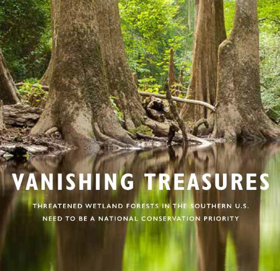 2016-02-02-1454439311-3643688-VanishingTreasuresWetlandForests550.jpg