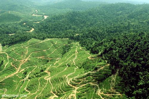 2016-02-02-1454440144-1401695-deforestationforpalmoilinBorneomongabay.jpg